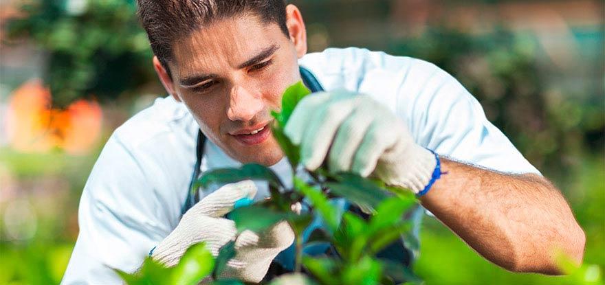 Gartenbau Flury Emch Offene Stellen