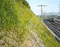 Böschung Bahntrasse
