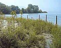 Naturnaher Wasserbau am Seeufer