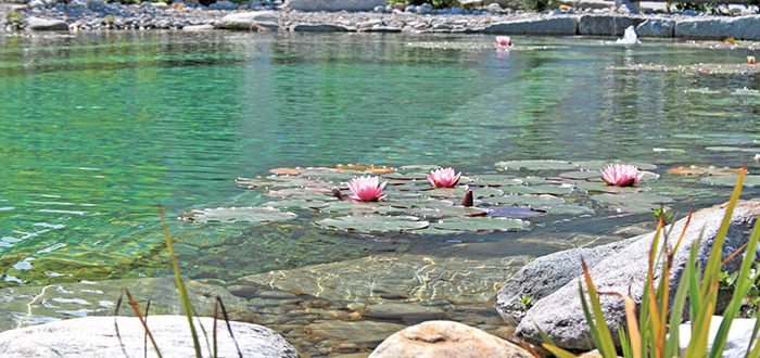 schwimmteich-lehnert-blog